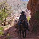 3135-grand canyon donkey