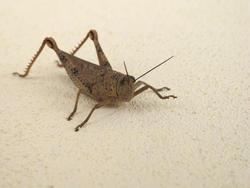 3375-grasshopper close up