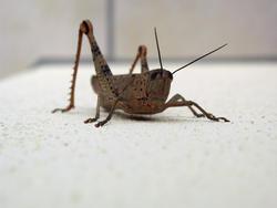 3378-grasshopper macro