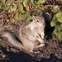 3228-cute squirrel