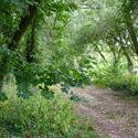4392   leafy english lane