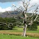 3691-lightning_tree.JPG