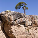 3187-lone tree