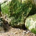 3889-mossy_stones.JPG
