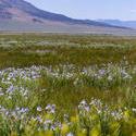 3074-mountain wildflowers