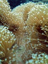 3351-soft coral polyps