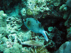 3353-reef fish and corals