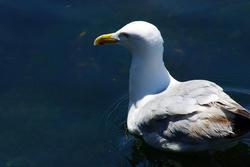 4310   Seagull Closeup
