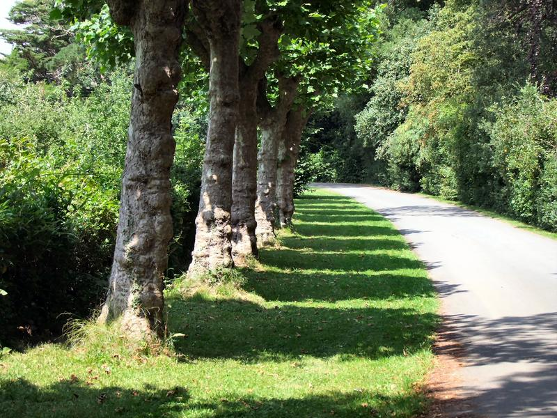 <p>Shadows of trees, Quarr Abbey, Isle of Wight&nbsp;</p>