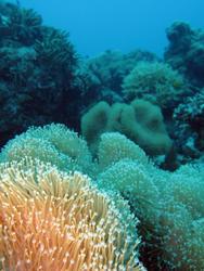 3358-coral polyps