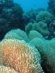 3359-soft coral reef