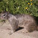 3235-squirrel
