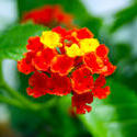 4312   Tiny Flowers