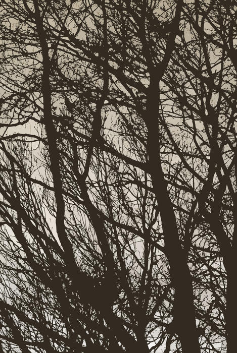 3006-tree branches