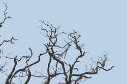 3007-gnarled tree branches