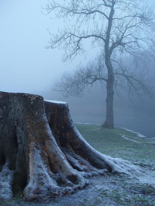3514-tree stump