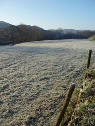 3526-frozen pasture