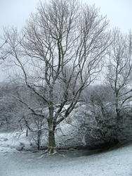 3527-frost landscape