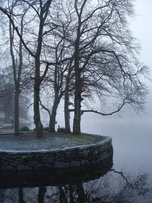 3525-trees in the mist