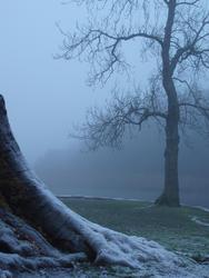 3529-winter woodland