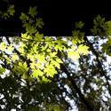3253-dappled woodland light