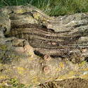 4493   fallen tree