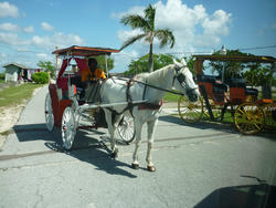 4796   horse and carriage