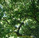 4636   leafy green shade