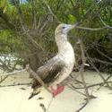 4524   maldives beach bird