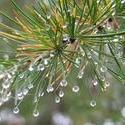 4952   waterdropslets3