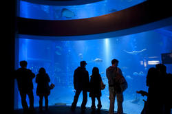 7429   Group of visitors viewing a marine aquarium