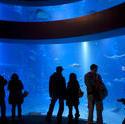 7429   Group of visitors viewing a marine aquarium