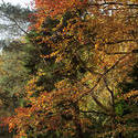 5156   Autumn Foliage In The Forest