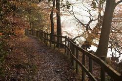 5157   Path Through Autumn Forest