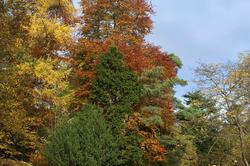 5159   Colourful Autumn Trees