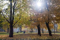 5162   Sunshine On Autumn Woodland