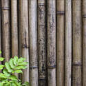 6306   Dried bamboo background