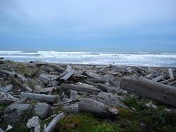 5749   beach driftwood