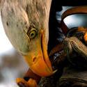 7627   Bird of prey