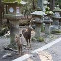 5958   Kasuga Taisha Deer