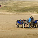7668   Blackpool donkey rides