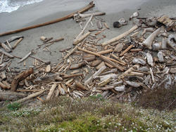 5765   driftwood