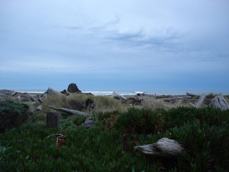 grey cloudy horizon with a forground of driftwood and beach plants