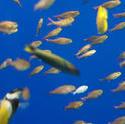 7412   Fish swimming in an aquarium