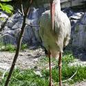 5234   heron zoo