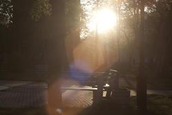 7234   light park sun trees