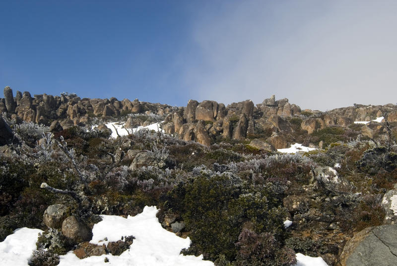 snow and frost covered plants on mount wellington, hobart, tasmania