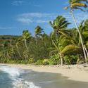 6339   Tropical paradise beach