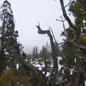 5861   central highlands trees