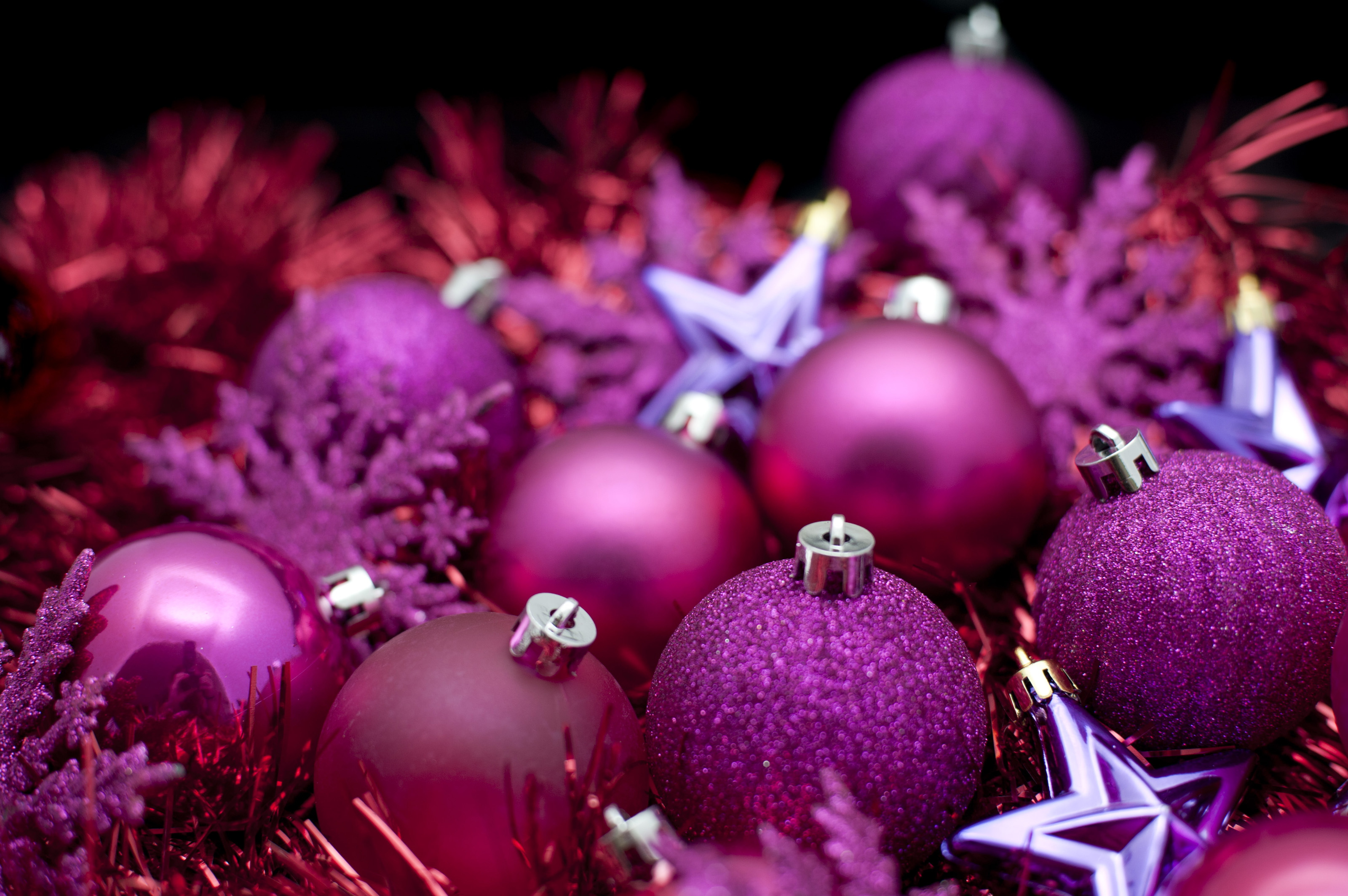Free Stock Photo 6825 Purple Christmas celebration ...